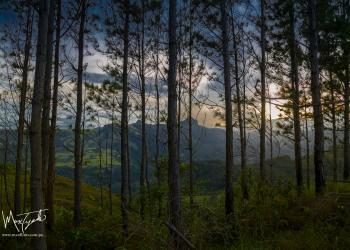 Panamá Nature